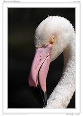 Camargue - Pont de Gau (BerColly) Tags: france birds spring google flickr paca printemps oiseaux camargue bouchedurhone pontdegau bercolly