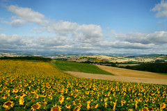 greetings from france (atsjebosma) Tags: flowers summer sun france yellow landscape ngc wolken npc zomer zon bloem atsjebosma mygearandme mygearandmepremium mygearandmebronze mygearandmesilver mygearandmegold mygearandmeplatinum mygearandmediamond