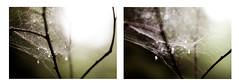Small Details (Sophia Alexis) Tags: alexis green rain norway fog details small raindrops 365 sophia