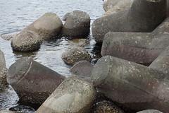 テトラポッド tetrapod