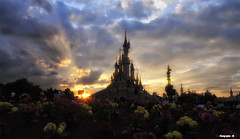 Disneyland Paris (seb-r) Tags: park sun paris france flower fleur soleil nikon disneyland coucher disney mickey nuage eurodisney parc coucherdesoleil disneylandparis disneylandpark d90 disneylandparc