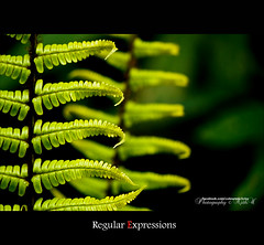 Regular Expression (Ajith ()) Tags: plant abstract green nature leaf flora earth eaglesnest arunachal eaglenest arunachalpradesh thegalaxy eaglenestwls mygearandme