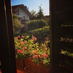 Another morning arrives - with geraniums #garden #morning #sunlight #outdoors #travel #sicly #italy (dewelch) Tags: ifttt instagram another morning arrives with geraniums garden sunlight outdoors travel sicly italy
