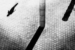 pillar of eternity (Zlatko Vickovic) Tags: shadow blackandwhite monochrome dark serbia streetphotography lightandshadow novisad vojvodina srbija streetbw streetphotographybw streetstreetphoto streetphotobw zlatkovickovic zlatkovickovicphotography