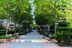New Jersey Park (Kevin Shriner) Tags: water view newyorkcity architecture newyork newjersey skyline parks trees plant tree garden outdoor bench sidewalk urban