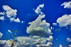 20160819_DP0Q5199 (NAMARA EXPRESS) Tags: landscape sky cloud blue weather antenna plane airplane jetplane deepsky deepblue shine summer fine outdoor color foveonclassicblue toyonaka osaka japan foveon sigma dp0 quattro wide ultrawide superwide namaraexp