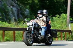 Harley-Davidson 1608203302w (gparet) Tags: bearmountain bridge road scenic overlook motorcycle motorcycles goattrail goatpath windingroad curves twisties outdoor vehicle