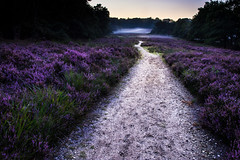 Heather Schaarsbergen (Jorick77) Tags: heide heather veluwe landschap landscape pad path d7200 nikon nikond7200 schaarsbergen arnhem gelderland