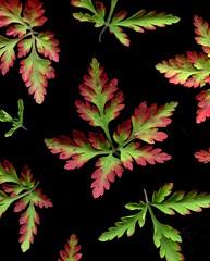 57559.51 Geranium robertianum (horticultural art) Tags: horticulturalart geraniumrobertianum geranium leaf leaves greenandred christmas