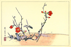 Chinese quince (Japanese Flower and Bird Art) Tags: flower chinese quince chaenomeles speciosa rosaceae rakusan tsuchiya nihonga woodblock print japan japanese art readercollection