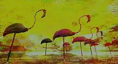 Dead quiet bay (Bamboo Barnes - Artist.Com) Tags: secondlife digitalart virtualart vivid yellow red lea light shadow photo painting bamboobarnes surreal bird bone water reflection flamingo texture