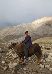 Wakhi teenage boy riding a yak, Big pamir, Wakhan, Afghanistan (Eric Lafforgue) Tags: 1617years afghan afghan298 afghani afghanistan altitude animal badakhshan bigpamir bosgrunniens centralasia colourimage community copyspace cultures day fullframe horned indigenousculture ismaili landscape lifestyles livestock lookingatcamera males malongzan mountain mountainrange nature nomad nomadicpeople oneperson outdoors pamirmountains people photography poverty riding rock scenery teenageboys teenager tourism traditionalclothing transportation traveldestinations vertical wakhancorridor wakhi workinganimals yak wakhan pamir