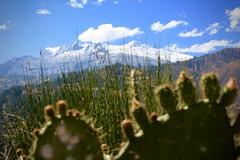 IMG_2018 (ls.laurasama) Tags: per cochinilla view snow prickly pear fichidindia
