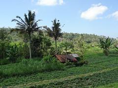 DSC05305.jpg (J0celyn79) Tags: asie bali indonésie karangasem id