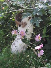 Septembre .... djeuner sur l'herbe (Pagan...poetry) Tags: lapin lapinou matin djeuner vanille nature bonjour septembre