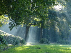 Beautiful start of the day (joeke pieters) Tags: 1300045 panasonicdmcfz150 zonnestralen sunrays sunbeams september boom tree vorden achterhoek gelderland nederland netherlands holland landschap landscape landschaft paysage
