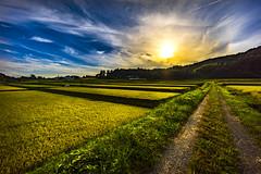 Autumn Colors (Art Fiveone) Tags:  otama fukushima japan autumn landscape sunset ricefield