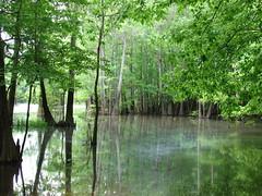 Kimbell Lake-Jackson, Alabama 3 (mrbama97) Tags: blue trees lake green water leaves outdoors sony alabama jackson dsch2 jacksonalabama kimbelllake