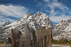 Cathedral Group of the Grand Tetons (Daryl L. Hunter - The Hole Picture) Tags: landscape bluesky wyoming grandtetons weatheredwood mountians oldwood treestump jacksonhole snowcovered grandtetonnationalpark weatheredtree jaggedmountains