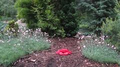 #61: the garden of Bowie (pikespice) Tags: red geotagged toy widescreen crab geotag gunsnroses gunsandroses spartanburg gunsroses hatchergardens hsm sooc 10millionphotos hatchergarden 100possibilities soundtrackmonday