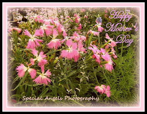 Happy Mothers Day by Tumbleweed Photography ~~Carol-, on Flickr