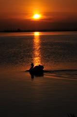 Sunrise and me! (Glowing Star) Tags: sunrise swan hamiltonontario