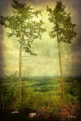 Weit du, dass die Bume reden? ... (Mara ~earth light~) Tags: trees texture nature photoshop germany landscape earth magic mother creativecommons nrw  treealley teutoburgerwald oerlinghausen hermannsweg naturepoetry fantasticnature romanceintheair tnsberg memoriesbook photographymypassion mara~earthlight~ lovelymotherearth artcityart