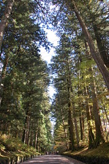 avenue of cedar trees (Lie's Foto Studio 2.0) Tags: nature japan asia nikko templesshrines