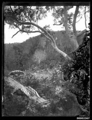 McDonald truss bridges in Galston Gorge NSW, 1894-1909 (Australian National Maritime Museum on The Commons) Tags: bridge river australia outback hawkesburyriver australianscenery landscapephotography riverscape galston australianbush galstongorge hornsbyheights trussbridges timbertrussbridge williamfhallcollection galstongorgensw mcdonaldtrussbridge berowracreekbridge pearcescreekbridge