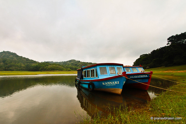 Two Of A Kind, At Periyar Tiger Reserve, Thekkady