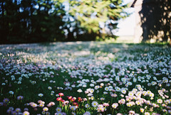 needs mowing (Liis Klammer) Tags: flowers film field grass analog 35mm garden estonia bokeh lawn zenit eesti zenitem