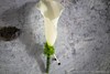 P1010219 (Garden Party Flowers) Tags: flowers white vancouver florist callalily boutonniere
