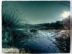Sommerabend am Eichholzmaar (memories-in-motion) Tags: olympus eifel omd maar wasservögel vulkaneifel em5 714mm landschaftsfotografie eichholzmaar panasincvario
