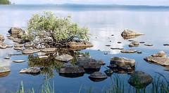 Lake Pielinen from Paalasmaantie (Juuka, 20160701) (RainoL) Tags: 2016 201607 20160701 fin finland fz200 geo:lat=6328367980 geo:lon=2936456680 geotagged honkasaari july juuka lake landscape paalasmaaarchipelago paalasmaansaaristo paalasmaantie pielinen pohjoiskarjala summer willow salixlapponum salix salicaceae pohjanpaju