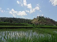 DSC05313.jpg (J0celyn79) Tags: asie bali indonésie karangasem id