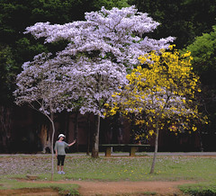 Ibirapuera (Serlunar (tks for 5.0 million views)) Tags: ibirapuera serlunar