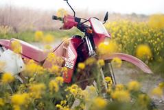L1008452c (haru__q) Tags: leica m8 leitz summicron field mustard  honda crm250r motorcycle 2st