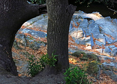 IMG_2715-end-of-day-f (posyche) Tags: lafayette trees rocks stream trunks