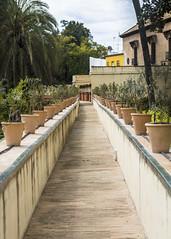 Alcazar Gardens (Hans van der Boom) Tags: europe spain vacation holiday seville sevilla alcazar palace gardens path plants potplants pots vanishing sp