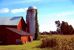 Right before the harvest begins... (bobglennan) Tags: barn redbarn nikond750 lateafternoon silo farm harvest corn landscape latesummer nikkor southjersey gardenstate