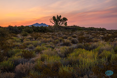 0825 IMG_5422 (JRmanNn) Tags: corncreek lasvegas paiuteindianreservation sunrise