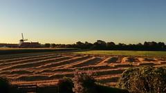 De morgenstond........... (Omroep Zeeland) Tags: biggekerke warm molen oogst