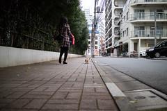 IMG_2129.jpg ( Yukio Endo) Tags: shelly
