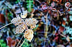 Jack Frost has arrived . . (JLS Photography - Alaska) Tags: alaska alaskalandscape autumn autumnfoliage forest foliage fallfoliage jlsphotographyalaska leaves frost frozen frosty freezing frigid cold icecrystals jackfrost fall nature outdoor plant woods depthoffield bright