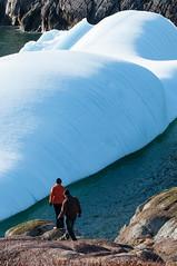 Quidi Vidi Icebergs (East coast Trail) (bonavistask8er) Tags: ocean newfoundland coast nikon harbour stjohns atlantic east iceberg vidi d90 quidi