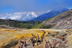 Borderline of life and death (meinbleistift) Tags: life indonesia death java mine border sulfur flickraward flickraward5 kawahiljen
