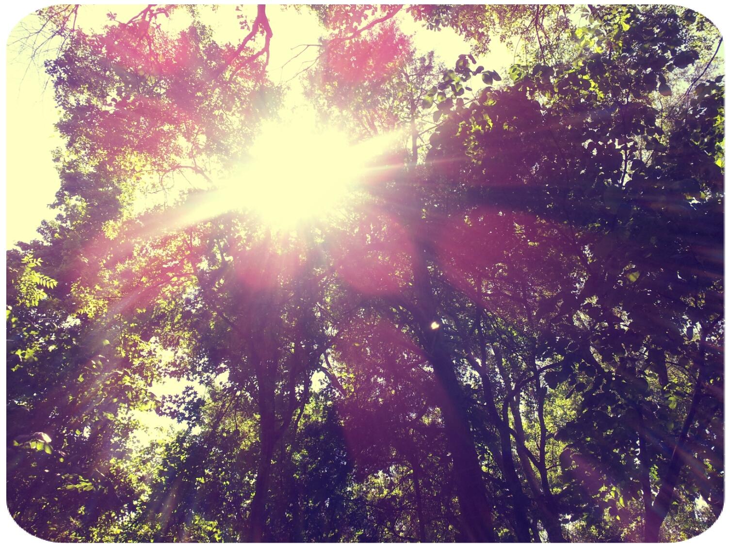2012-04-23 15.14.28_Roxy_Round.jpg