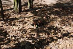 Cu Chi Tunnels - Trapdoor Entrance 5 (Le Monde1) Tags: river nikon war entrance tunnel delta viet american jungle soldiers fighting saigon hochiminhcity mekong cuchitunnels lemonde trapdoor d60 vietcong hochiminhtrail