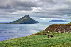 Velbastadur, Faroe Islands, Denmark (**Anik Messier**) Tags: summer holiday landscape denmark islands sheep goat faroeislands panoramicview faroes hestur kingdomofdenmark koltur elevatedview hestsfjrur streymoyisland velbastadur velbastaur artistpicks anikmessiercopyright velbastaour hestsfjorour