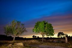 Los colores de la noche.... (Angeles Bañon) Tags: noche arboles campo cielos yecla collores jcasielles josecasiellesfotografo